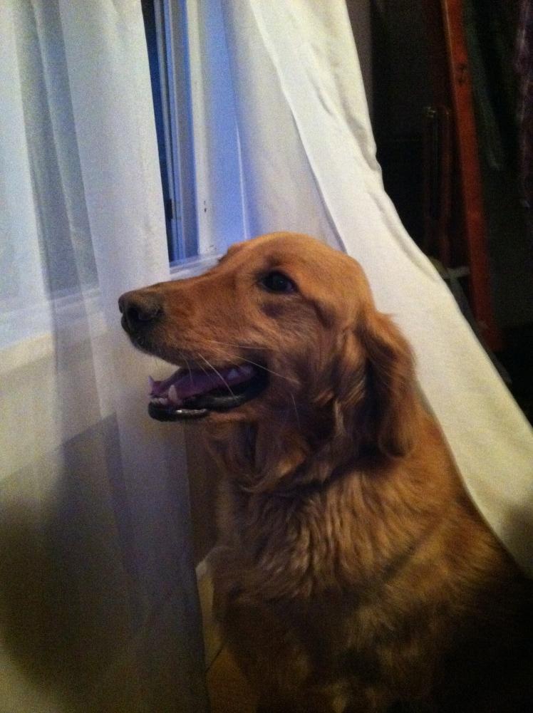Daisy enjoys the windows open as well.