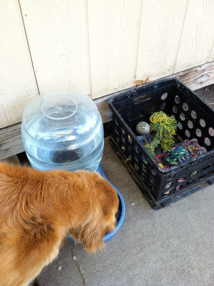 Daisy finally got her outdoor water bowl back and we were able to round up all of toy to place back in her toy box.