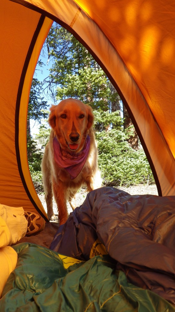 Daisy wanted to join us in the tent