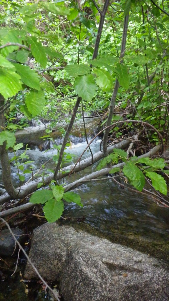 "Our camp-side stream. This stream ran right by our ""kitchen"" and provide beautiful background noise for dinner."