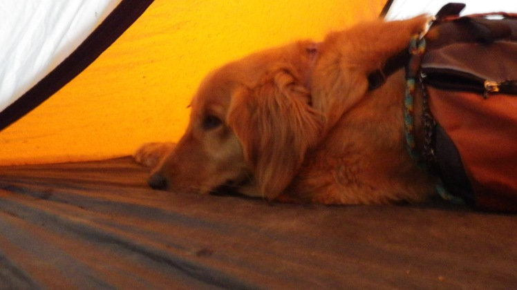 Luckily Lyle got the tent up in time before the clouds burst. Daisy did not like being cooped up in the tent the whole evening.